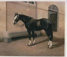 <h5>Sefton Cavalry Horse</h5>